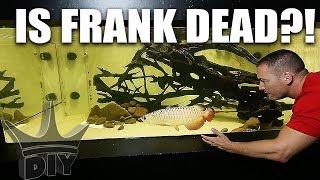 WHAT HAPPENED TO FRANK!?! My pet aquarium fish