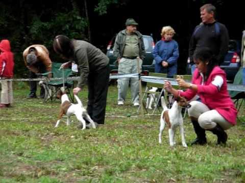 Xxx Mp4 Specialty Fox Terrier Show 2009 Horni Jeleni CZ Best Bitch Competition 3gp Sex