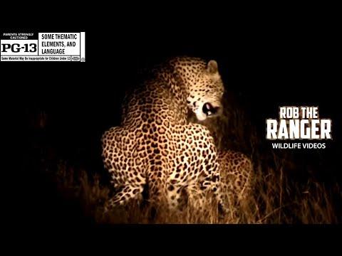 Xxx Mp4 Sex In The Wild Leopard Virgin YoutubeZA 3gp Sex