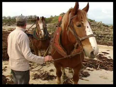 Le laboureur goémonier du Léon et son cheval de trait