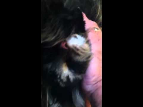 Mom shaving the pussy