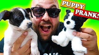Magic Halloween Puppy Prank!