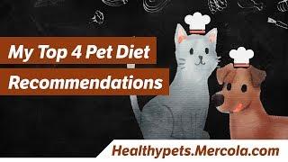 My Top 4 Pet Diet Recommendations