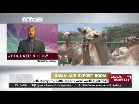 Somalia has exported 5.3 million animals in 2015