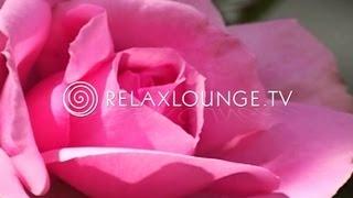 DENKE POSITIV - Gesundheit, Spa & Wellness - Yoga Musik, Spirituell, Heilen & Energie