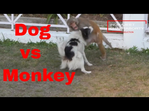 Xxx Mp4 Dog Vs Monkey Fight Video 3gp Sex