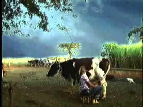 Homem Comendo uma vaca