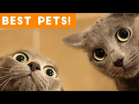 Xxx Mp4 Best Animal Videos Of 2018 So Far Funny Pet Videos 3gp Sex