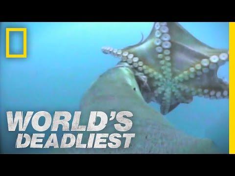 World s Deadliest Sea Lion vs. Octopus
