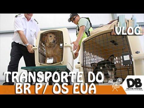 Transportando seu Pet do BR para os EUA - Db In The USA #549