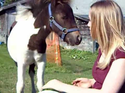Xxx Mp4 A Girl S Best Friend A HORSE 3gp Sex