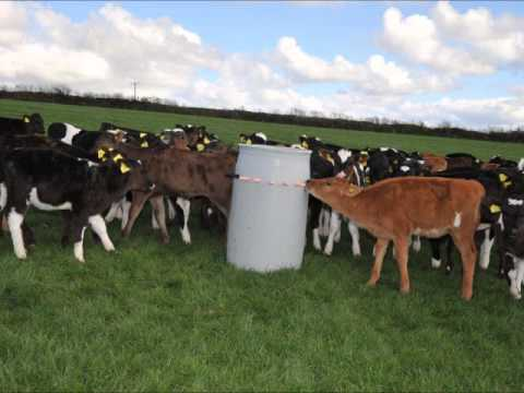 Low Input Dairying and calf rearing - Andrew Brewer
