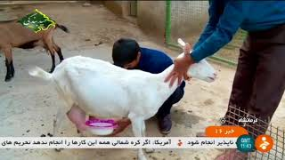 Iran Derkeh village, Sahneh county, People & Agriculture activities مردم و كشاورزي روستاي دركه صحنه