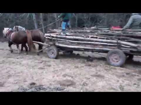 Konie zimnokrwiste w lesie