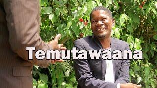 Temutawaana - Ugandan Luganda Comedy skits.