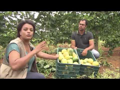 Presidente Tancredo Neves ba Investimento na produção de Maracujá Bahia Rural