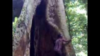Nude person found in Kerala forest
