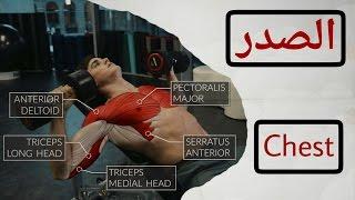 عضلة الصدر : شرح | تمارين | التشريح العضلى | الإداء الصحيح | تعليمات السلامة