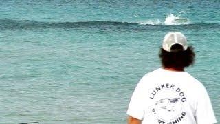 Bait Migration 2013 Mullet Run - Fort Lauderdale Beach