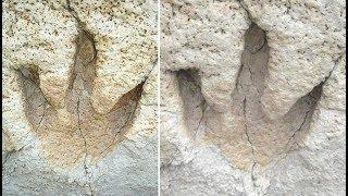 5 Best Places To Find Dinosaur Bones & Fossils