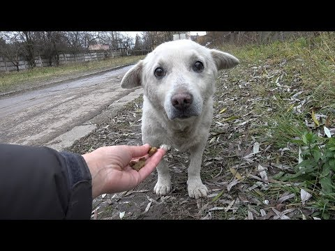 Xxx Mp4 Rescue Of A Scared Homeless Dog With A Broken Heart 3gp Sex