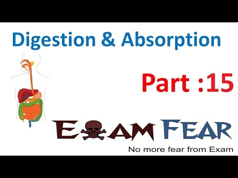 Biology Digestion & Absorption part 15 (Small intestine: Chemical process) CBSE class 11 XI