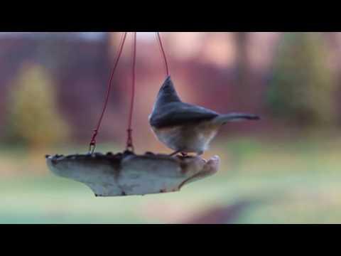 Xxx Mp4 Birds At Feeder Comedy – Funny – Whats App – Facebook – ALLMIX YouTube Intro Video 999 3gp Sex