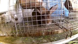 Клетки для молодняка кроликов своими руками видео