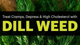 Surprising Dill Weed Benefits (treat cramps, Epilepsy, depress and high cholesterol
