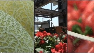 Agriculture technologies - Israeli expertise feeds the world