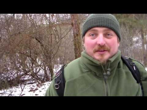 Czym dokarmiać ptaki żeby chętnie odwiedzały karmnik