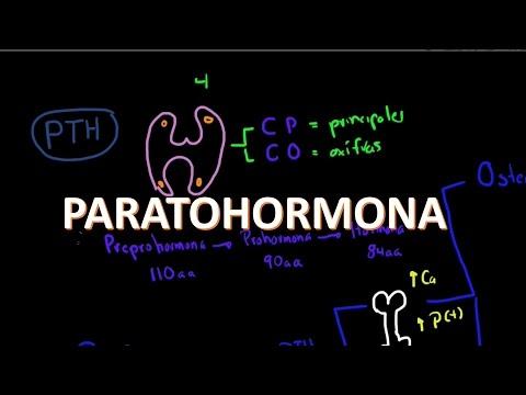 Xxx Mp4 Metabolismo Del Calcio Paratohormona 2 De 4 3gp Sex
