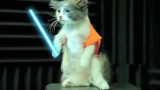 Lucu, Kucing Perang Ala Star Wars