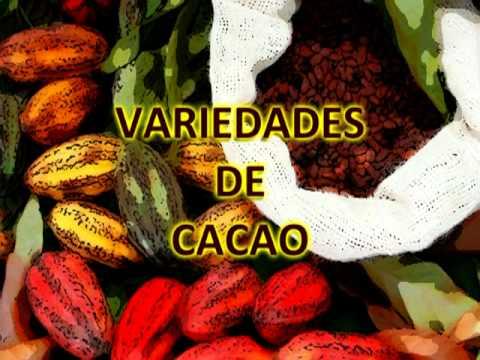 DEL CACAO AL CHOCOLATE.mpg