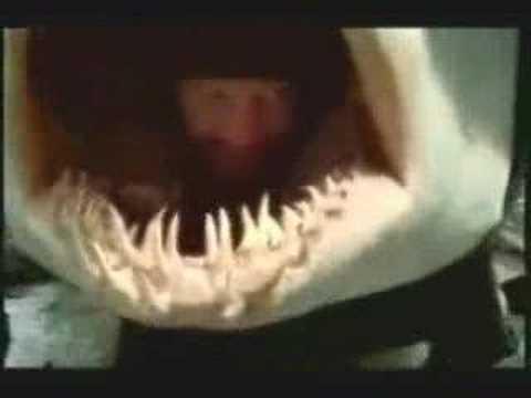 Tubarão vomita pescador