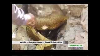 Iran Sistan & Balouchestan province, Natural Honey عسل طبيعي توليد شده سيستان و بلوچستان ايران