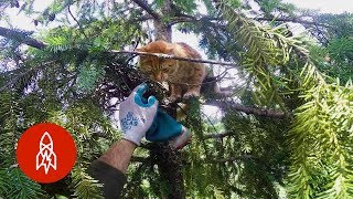 Rescuing Cats From Super Tall Trees
