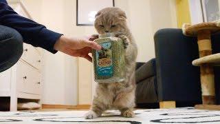 고양이의 마약 캣닙에 대한 반응 Reaction to Cat Nip 猫たちのケッニプに対する反応 [SURI&NOEL수리노을]