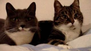 The two talking cats