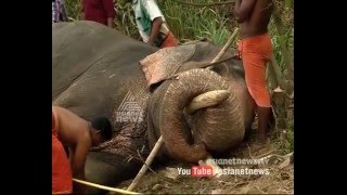 Elephant gores mahout to death in Thrikkannapuram | FIR 04 Apr 2016