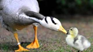 Maurice Ravel - Suite Ma mère l'oye / Mother Goose Suite