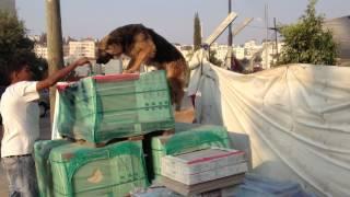 الكلبه شوشو من اذكى الكلاب مع العمواسي