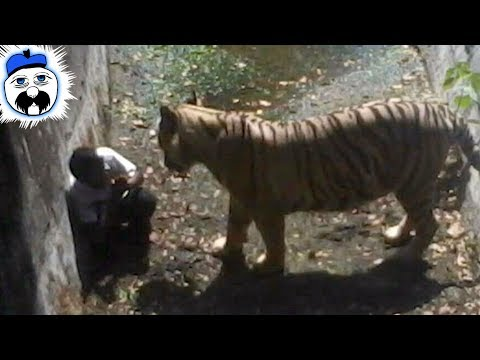 10 Times People Ended Up In Zoo Enclosures