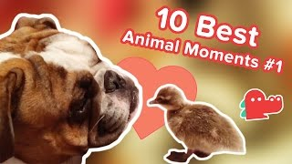 10 Best Animal Moments of the Day #1