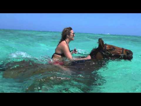 Grand Cayman Swim with Horses