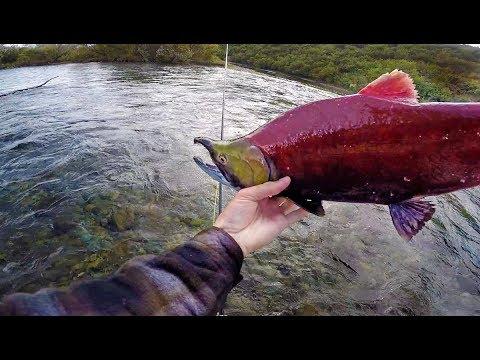 Bare Hand Fishing In Remote Glacier Rivers