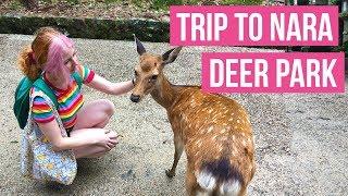 Nara Deer Park in Japan!  - Getting to Nara Park travel guide tour -