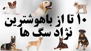 ۱۰ تا از باهوشترین نژاد سگ ها