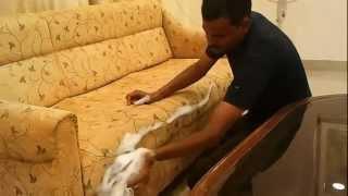 Shampoo Cleaning of Sofa/Upholstery - www.mysofacleaner.com
