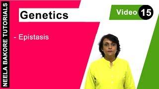 Genetics - Epistasis